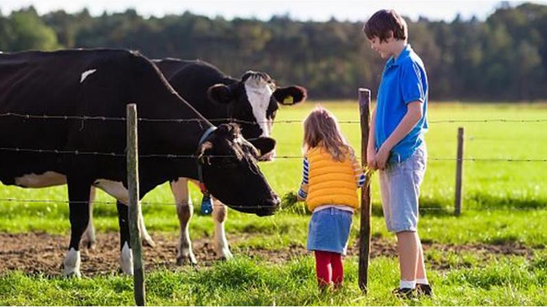 Отримають доплату ЄСВ сімейні фермерські господарства з наступного року
