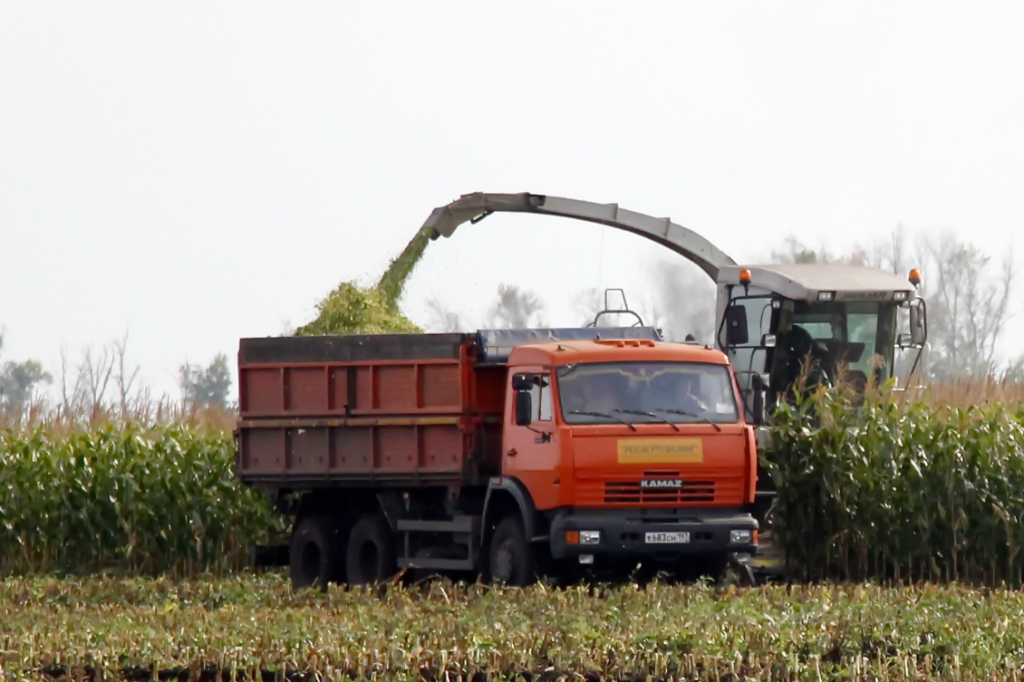 8 правил заготівлі і прибирання кукурудзи на силос