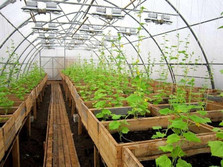 Как вырастить растения в теплице?