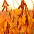 Соя и другие продукты от «Агроэксперт-Трейд»